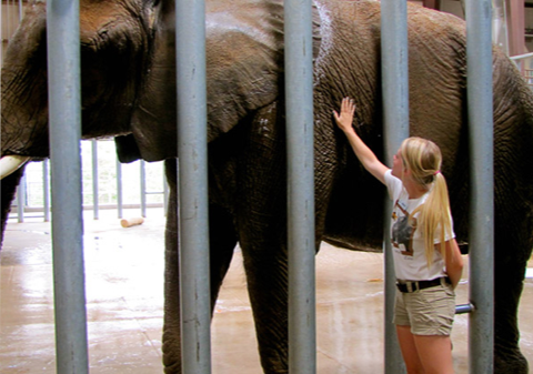 Veterinary student with elephant